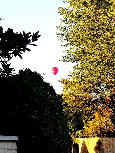 Hot Air Balloon Red Hot Air Balloon Red Balloon Poplar Tree Residential Street Tree Flying Silhouette Sky
