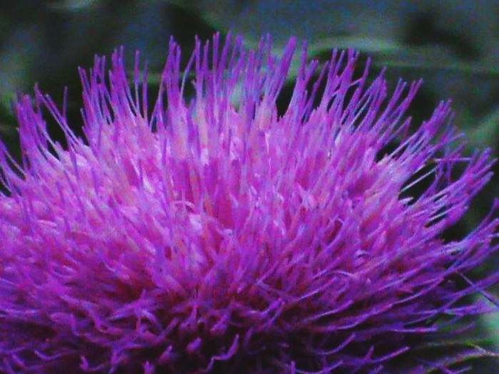 Flower Purple Beauty In Nature Close-up