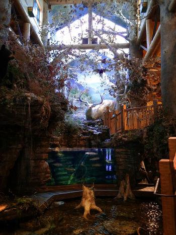 Indoor Wildlife Bass Pro Shops Beautiful Bucolic Entrance Fish Indoors  Inside Nature Statue Wildlife