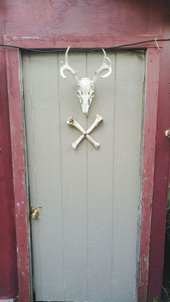 Door Wood - Material Day Architecture No People Building Exterior Built Structure David Tupponce Tupponce Photography USA New Jersey Mullica Hill NJ United States Of America North America Death & Decay Sun Bleached Deer Skull Deer Antler Skull And Crossbones Wood Farm Life Deer Paneling Painted Surface Hanging