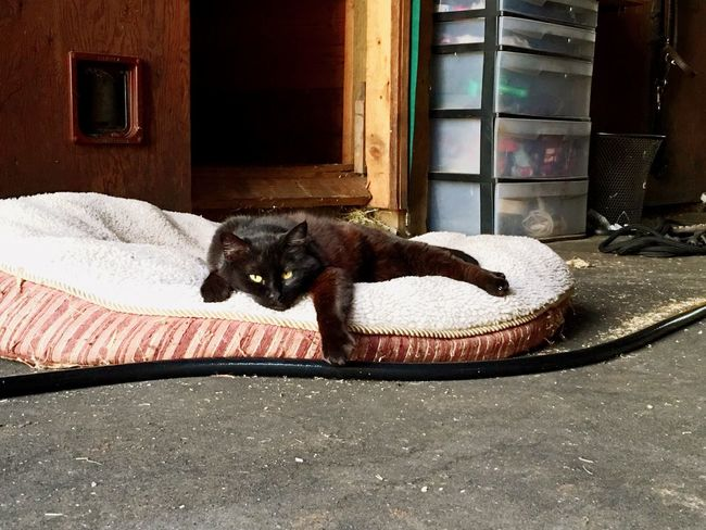 Cat Love Peace And Quiet Hotsummernight Relaxing BLackCat Layla Check This Out Enjoying Life Animals Precious