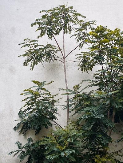 Digital composite image of palm tree against sky