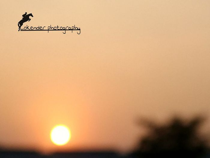 Classy Sunset Direction Copy Space Guidance Communication Bird Outdoors