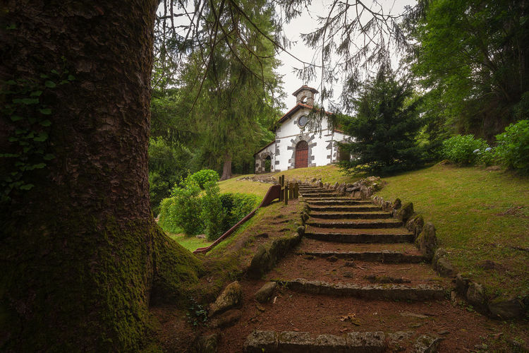 Low angle view of man standing on staircase in forest