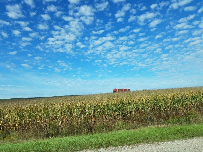 Agriculture Beauty In Nature Blue Corn Cornfield Farm Field Grass Nature Scenics Sky