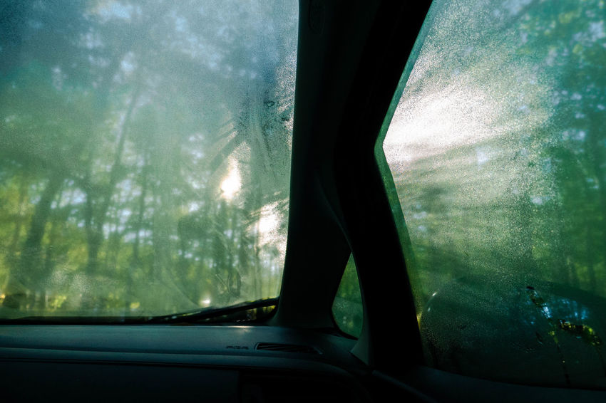 Morning light through trees in the the forest and dew on the windshield. From inside a car. Dew Morning Light Trees Body Part Car Car Interior Car Point Of View Day Forest Glass - Material Indoors  Land Vehicle Mode Of Transportation Motor Vehicle Nature One Person Plant Road Trip Transparent Transportation Tree Vehicle Interior Window Windshield
