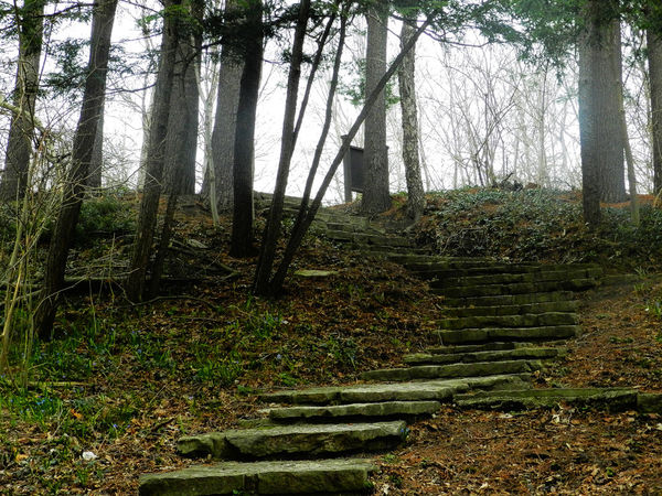 Stone Stairs Beauty In Nature Day Fog Footpath Green Color Growing Landscape Moss Nature No People Outdoors The Way Forward Tranquility Tree WoodLand Trail Michigan Dearborn The Path Ahead Scenic Henry Ford Estate Stairs Slate Stone Trees