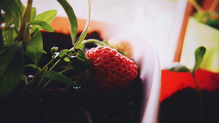 Close-up of red strawberry