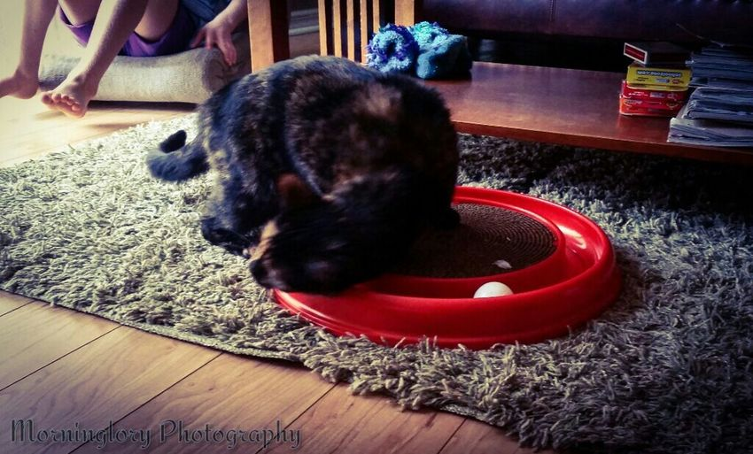 Cat♡ Present Catniptoy Kittyheaven