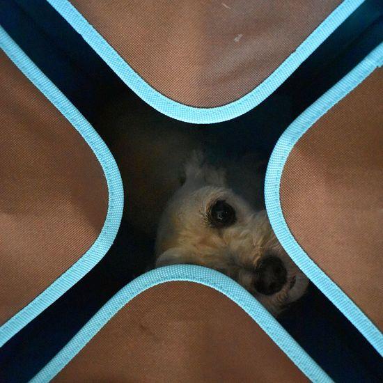 Full Frame Backgrounds Pattern No People Close-up Day Indoors  NikonD3400 Sanfrancisco Blue Hideandseek Dog Schnauzer Pet Portraits
