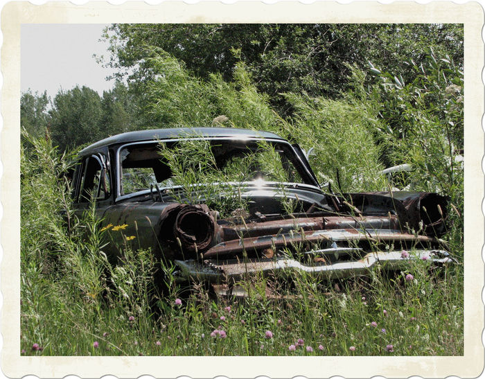 Abandoned Bad Condition Nature Obsolete Old Car Old Cars Scrap Scrap Yard