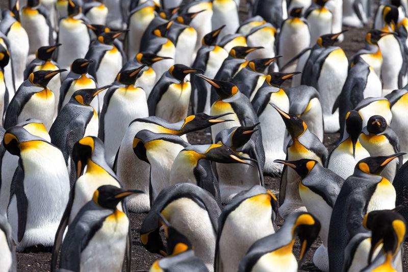Full frame shot of birds