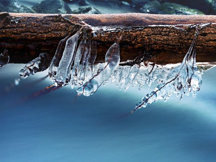 Icicle hang on twig and icy bark above chilli rapids. winter stream, thin icicles hanging on tree