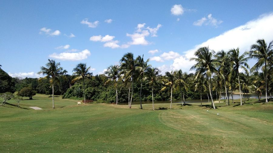 a view of palm trees Tree Sky Grass Cloud - Sky Palm Tree Coconut Palm Tree Agricultural Field Golf Course Palm Leaf Green - Golf Course Plantation Coconut Tropical Tree Palm Frond Cultivated Land Farmland