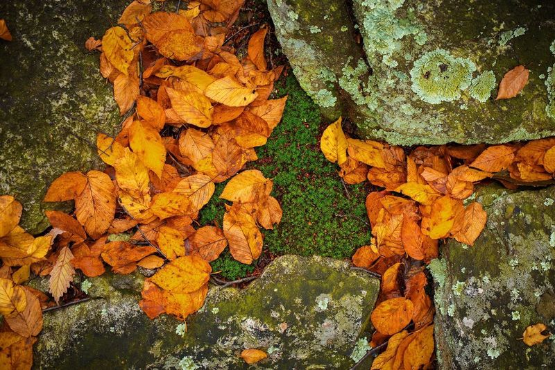Close-up of autumn leaf on tree trunk