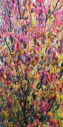 Autumn fall Multi Colored Backgrounds Full Frame Close-up Plant Life Leaves Fallen Fall Autumn Change Fallen Leaf