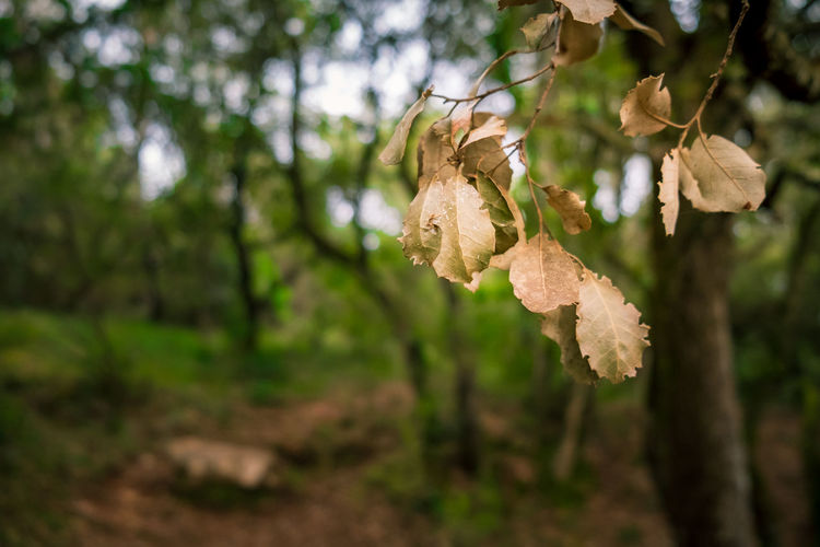 Dried Leaves Forest Forest Photography Forestwalk Plant Tree Focus On Foreground Growth Plant Part Leaf Beauty In Nature Nature Close-up Day No People Branch Land Outdoors Tranquility Dry Fragility Vulnerability  Freshness Change Leaves