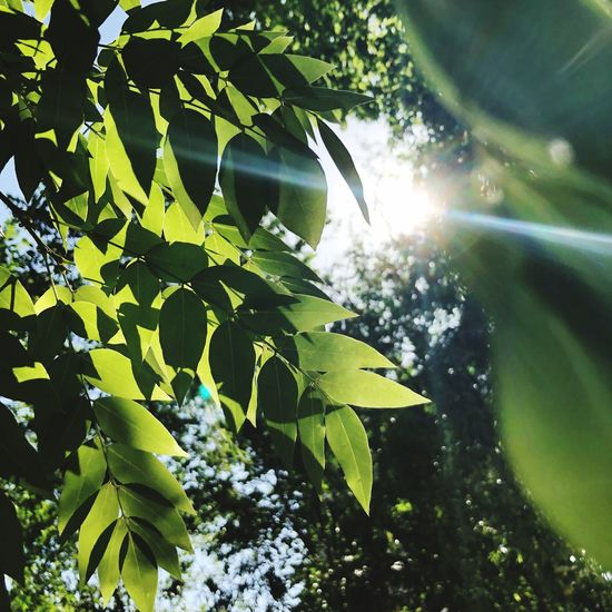 Leaf Plant Part Plant Growth Tree Green Color Nature Sunlight