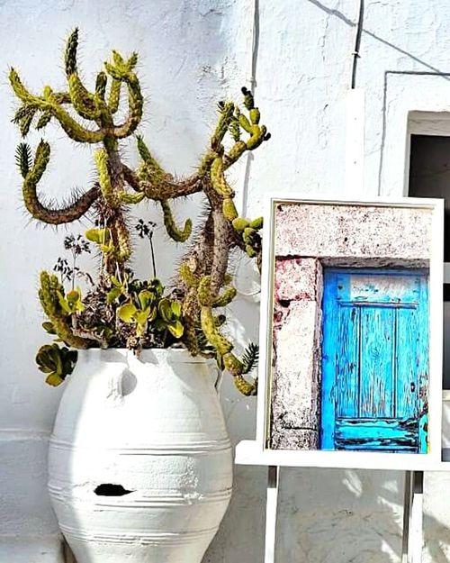 street flower mirror door white blue green santorini greece life Cactus Reflection Life In Colors Light