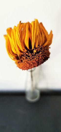 Close-up of orange flower vase on table