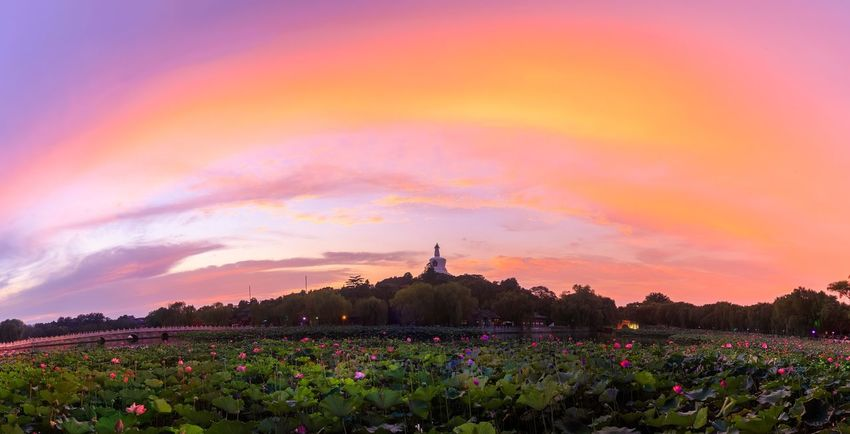 Sunset Flower Nature Beauty In Nature Scenics Travel Destinations Sky Landscape Tranquility Landmarks Outdoors Cloud - Sky Multi Colored Statue Beauty Plant Built Structure Flowerbed No People Day Beijing Beijing, China Landmark Red Beihai Park