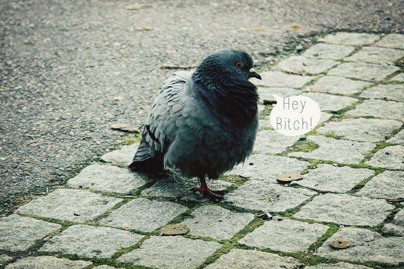 Bird Text