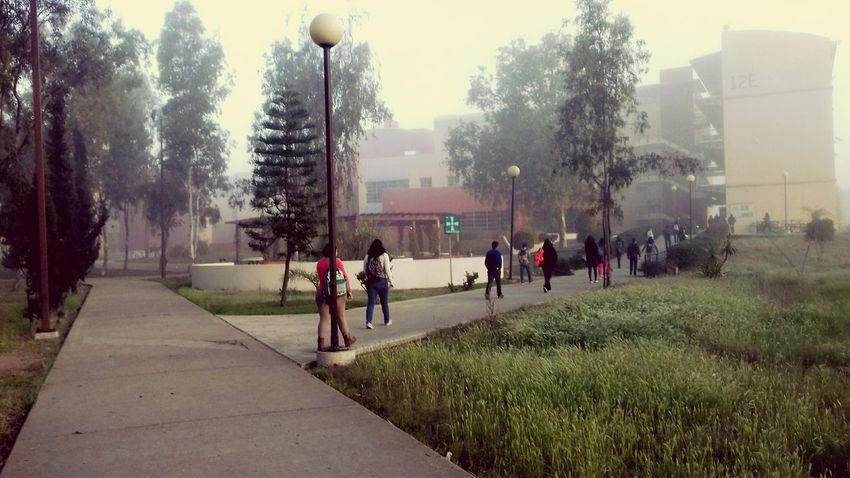 UABC  Trees Misty Morning Mist Lantern Morning