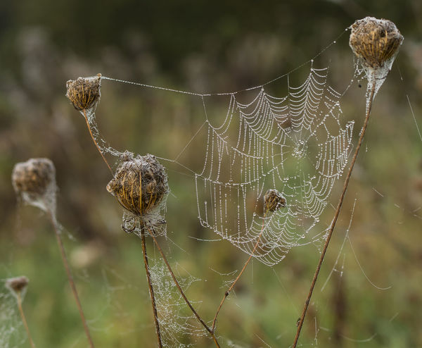 Autumn Morning Nature Nature Photography Underground Animal Themes Beauty In Nature Close-up Closup Cobweb Day Focus On Foreground Fragility Greenery Intricate Nature No People One Animal Outdoors Seed Head Spider Spider Web Spiders Web Stalk Web