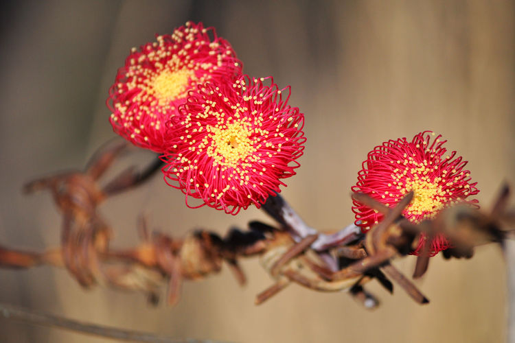 Red flowers on barbed wire