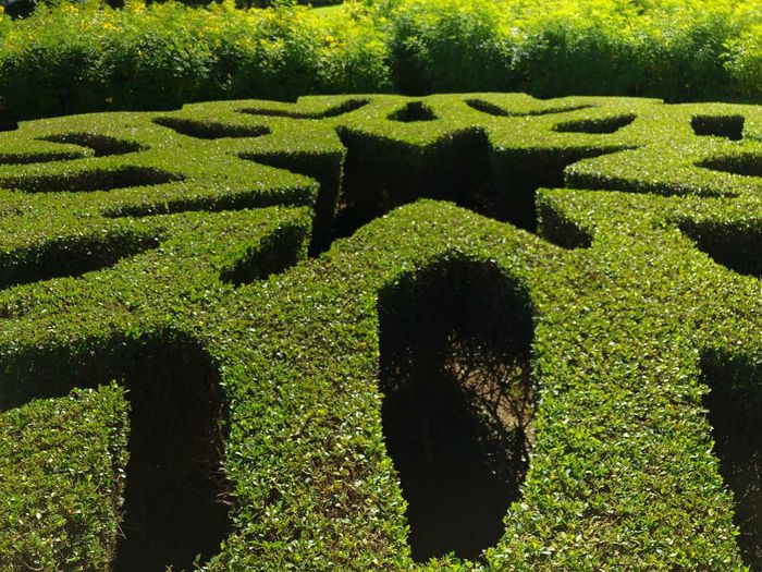 Shaped Shrub Garden Muscat Ornamented Garden Shrub Green Topiary Opera Muscat Topiary Oman Sunlit Sunshine Maze Confusion Park - Man Made Space No People Outdoors Puzzle  Nature Day