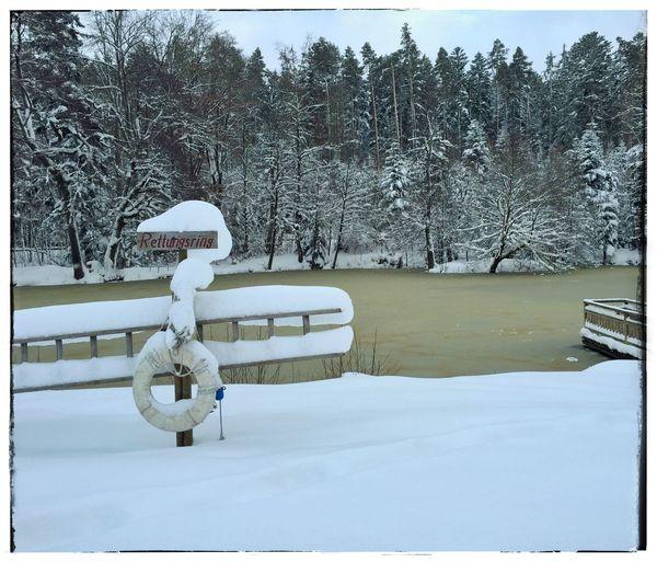 Rettungsring Safety Ring Rettungsring See WinterSea Winter Wintertime Winter Wonderland Königsfeld Segeweiher Baden-Württemberg  Germany