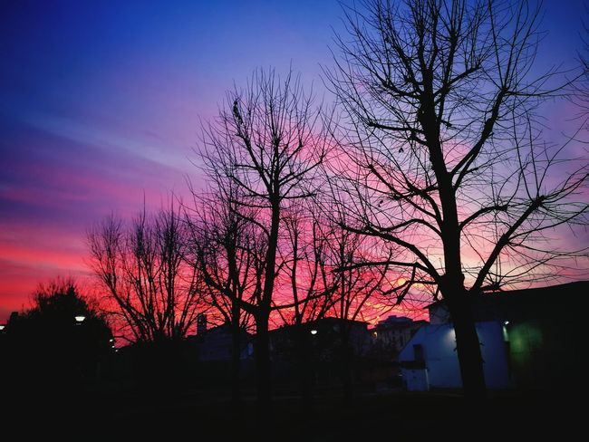 Twilight in town whith Trees . Sunset Silhouette Nature Tree Sky Beauty In Nature Cloud - Sky Dramatic Sky No People Outdoors Nature