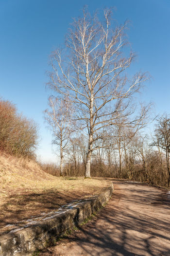 Bare Tree Beauty In Nature Clear Sky Day Direction Environment Footpath Land Landscape Nature No People Outdoors Plant Road Scenics - Nature Sky Sunlight The Way Forward Tranquil Scene Tranquility Tree