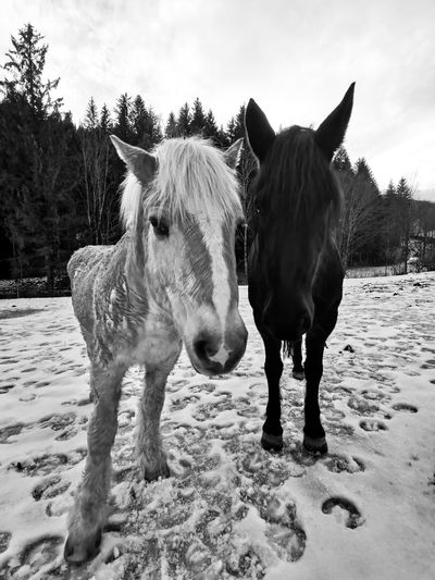 Portrait of horses standing on field