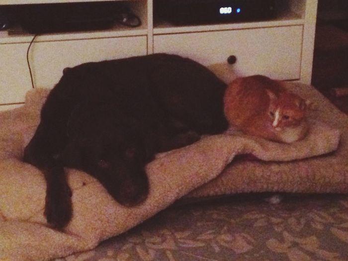 What I saw when I woke up last night. Dog Loves Cat Cat Loves Dog Mypetsrule