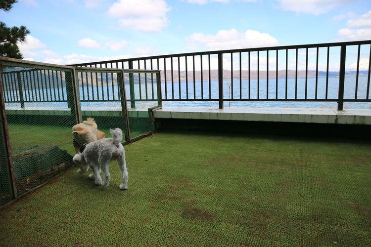 Dog Sky Railing