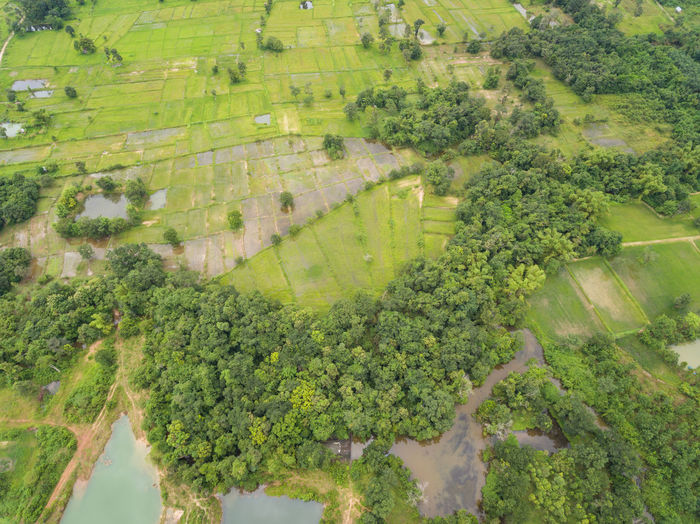 Aerial top view green forest for background Landscape Green Color Plant Growth Beauty In Nature Environment Scenics - Nature Agriculture Rural Scene Tranquil Scene Tranquility Field Aerial View Nature Tree Farm No People Day Land Outdoors Plantation Hedge