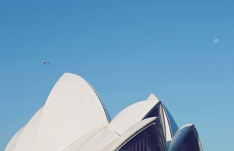 The Opera House and the Moon Bird Moon The Opera House Sky Architecture Blue Built Structure Low Angle View Building Exterior Nature Clear Sky Travel Destinations Tourism City