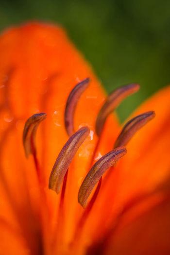 Flower Outdoor