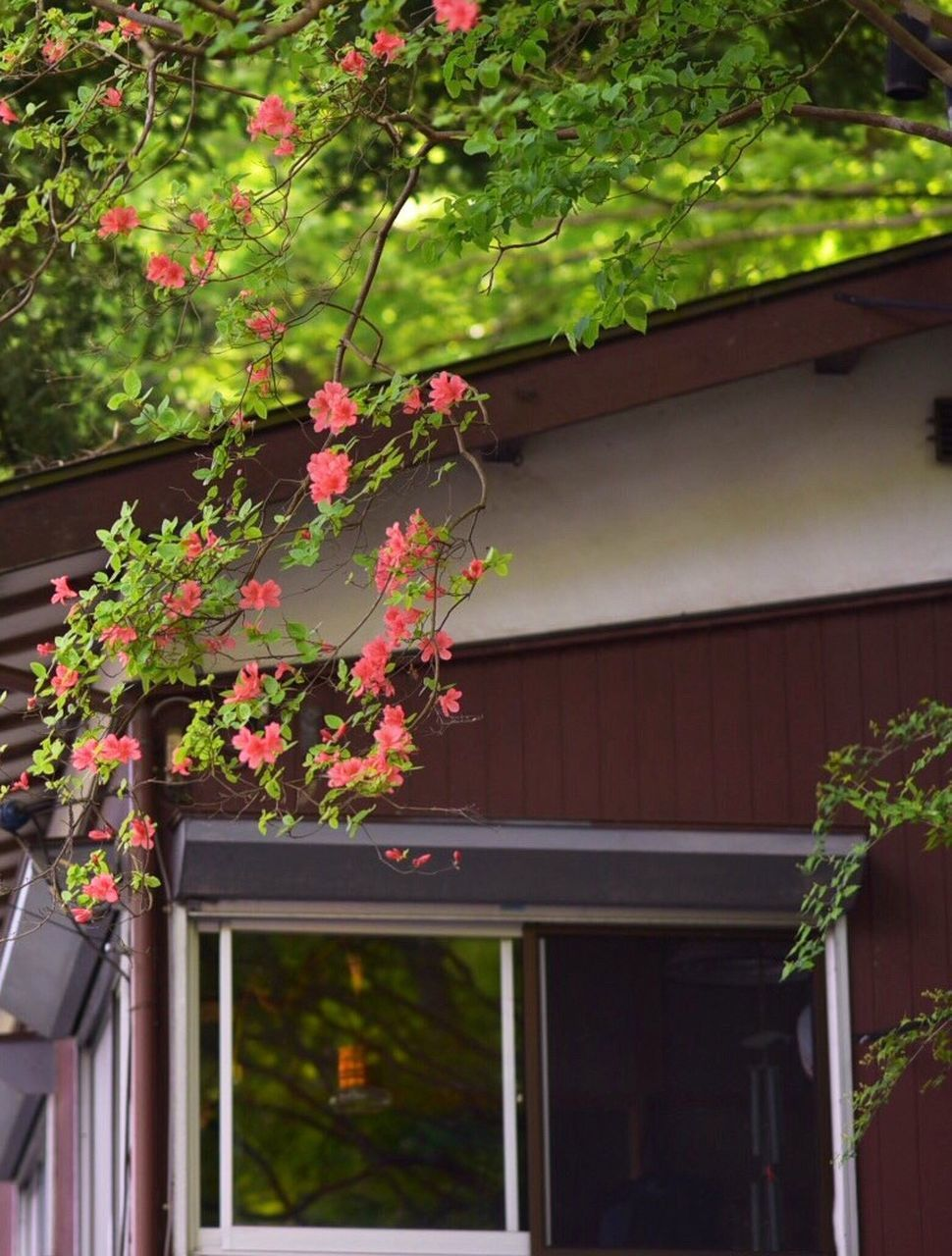 growth, architecture, building exterior, plant, built structure, tree, outdoors, house, flower, no people, nature, day, beauty in nature, low angle view, window box, freshness