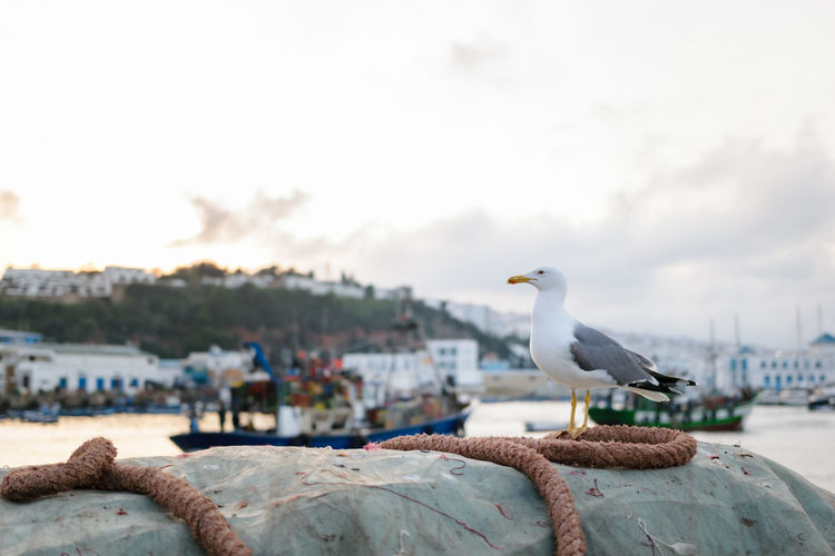 A seagull sitting on a dew in front of the port of M'Diq in Morocco. Animal Animal Themes Animal Wildlife Animals In The Wild Bird Focus On Foreground Freedom Gull Harbor Liberty M'diq Mdiq Morocco No People One Animal Outdoors Perching Port Sea Seabird Seagull Sitting Sky Water Wildlife