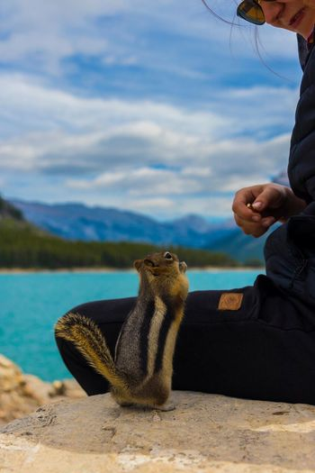 Such a cutie 💕🐿 One Person Water Nature Outdoors Nature Landscape Happiness Photographing Camping Sunlight Chipmunk Eating Chipmunk Lake Banff National Park  Scenics Beauty In Nature EyeEm Best Shots EyeEmNewHere EyeEm Nature Lover Alberta Picturesque