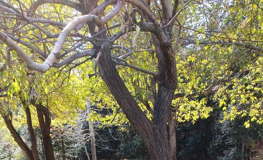 Nature Seeking out? Beauty In Nature Branch Contrast In Nature Dry Tree Between Green Drying Forest Gods Art Gods Creation Growth Life Cycle Nature No People Outdoors Tree Tree Trunk WoodLand