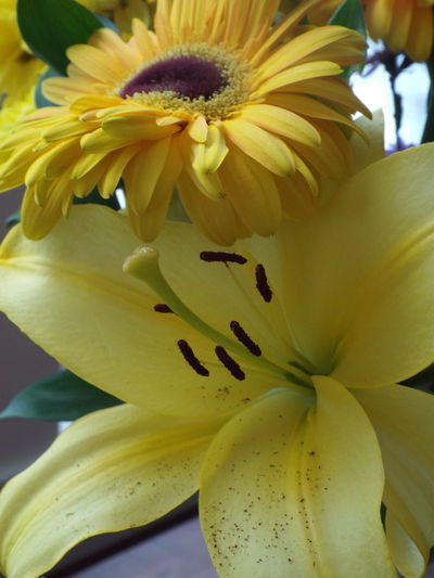 Winter on the outside, summer on the inside. ~:-) Bouquet Close-up Contrast Flower Flower Head Freshness Indoors Outdoors Petal Purple Flower Snowing Winter Yellow Flower