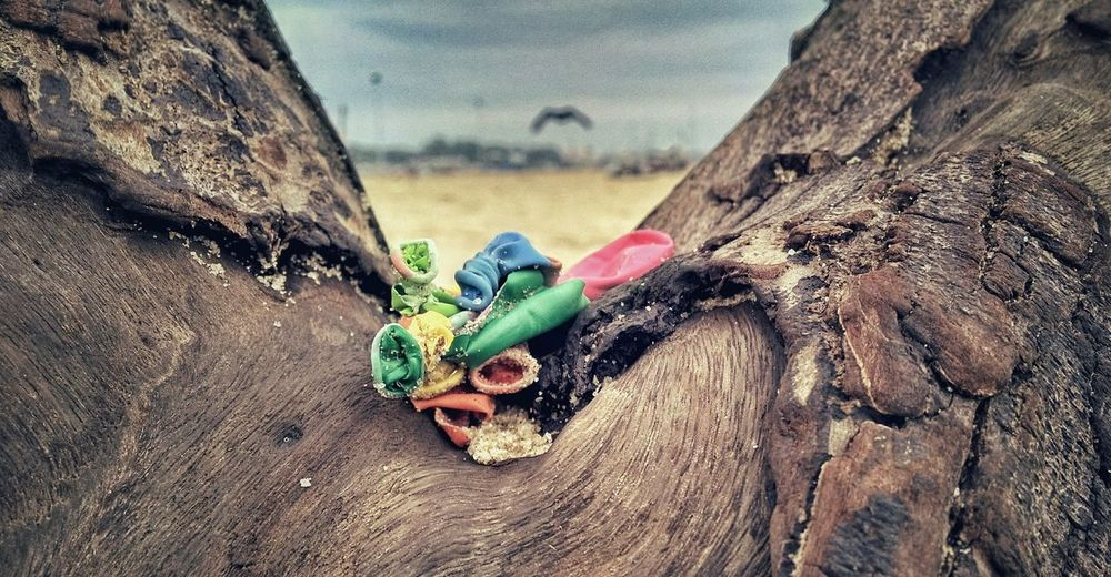 Close-up of burst balloons on tree