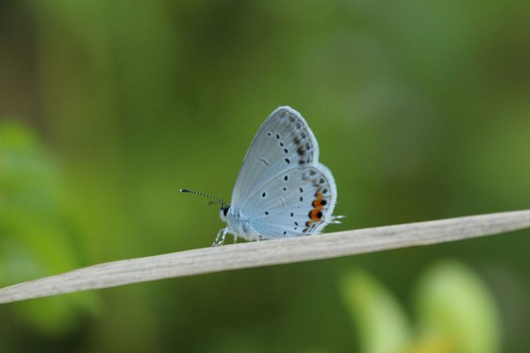 Japan Nature Beauty In Nature Bugs Butterfly Butterfly - Insect Pretty