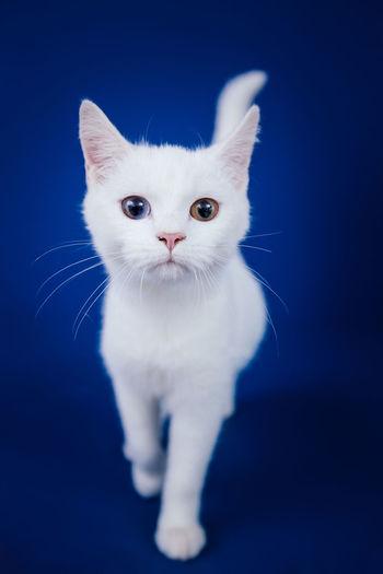 Portrait of white cat against black background