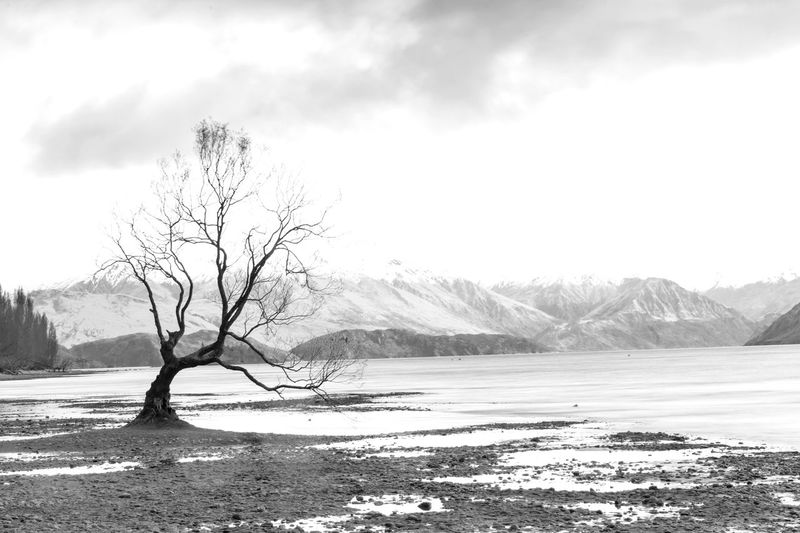 Bare tree on snowcapped mountain against sky