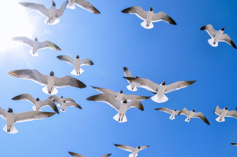Seagulls flying against clear sky