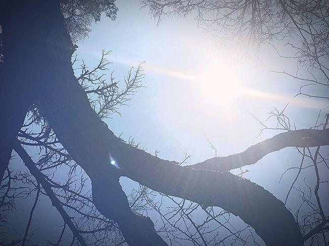 Tred Sun Tree Sunbeam Nature Beauty In Nature Bare Tree Sunlight